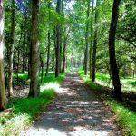 Morrow Mountain State Park